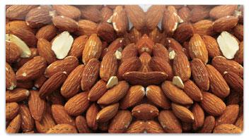 Go Nuts! Checkbook Cover