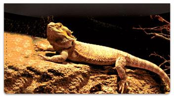 Reptile Checkbook Cover