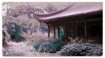 Japanese Garden Checkbook Cover