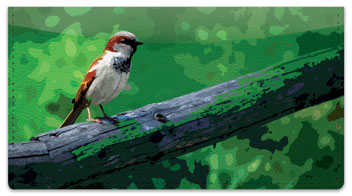 Sparrow Checkbook Cover