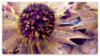 Thistle Checkbook Cover