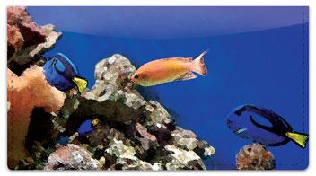 Underwater World Checkbook Cover
