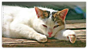Cat Nap Checkbook Cover