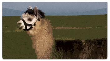 Llama & Alpaca Checkbook Cover