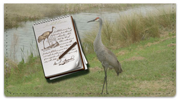 Audubon Sketch Checkbook Cover
