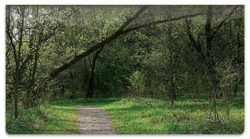 Nature Trail Checkbook Cover