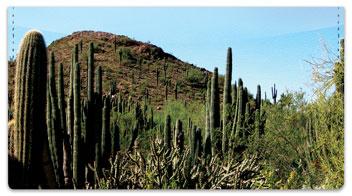Cactus Checkbook Cover