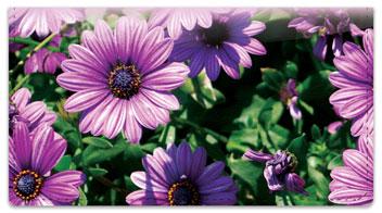 Backyard Flower Garden Checkbook Cover
