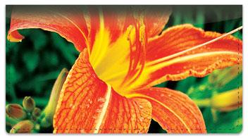 Orange Flower Checkbook Cover