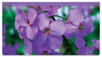 Purple Flower Checkbook Cover