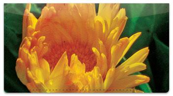 Yellow Flower Checkbook Cover