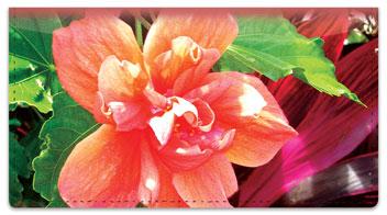 Tropical Plant Checkbook Cover