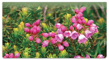 Wildflower Checkbook Cover