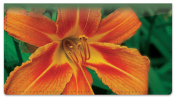 Lily Checkbook Cover