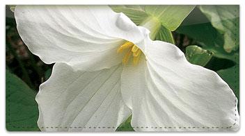 White Trillium Checkbook Cover
