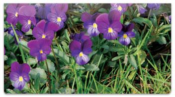 Vivid Violet Checkbook Cover