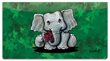 Wildlife Series 1 Checkbook Cover