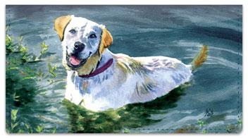 Dog Artwork Checkbook Covers