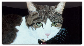 World of Cats 2 Checkbook Cover