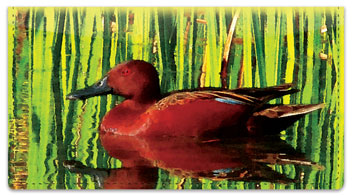 Bulone Bird Checkbook Cover