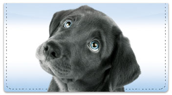 Black Lab Pup Checkbook Covers