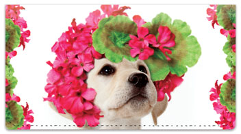 Pup in Bloom 1 Checkbook Covers
