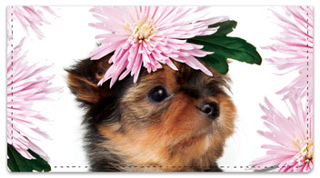 Pup in Bloom 2 Checkbook Covers