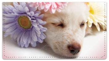 Pup in Bloom 3 Checkbook Covers