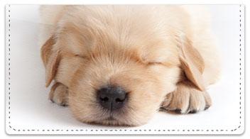 Sleepy Golden Pup Checkbook Covers