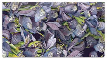 Iris Checkbook Covers