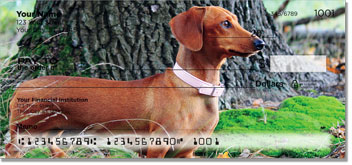 Dachshund Close-Ups Checks