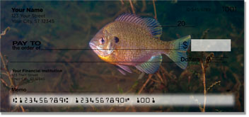 Bluegill Checks