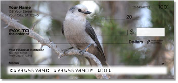 Gray Jay Bird Personal Checks