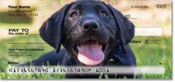 Dog Portrait Checks