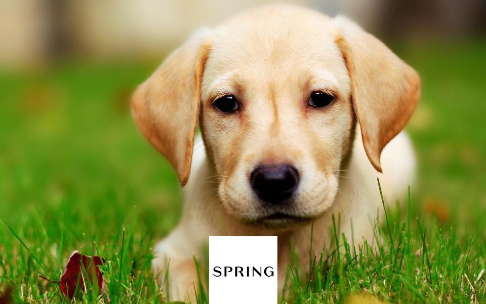 Spring bideawee