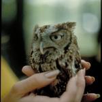 Owl__web_large