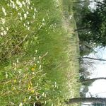 Aster_flowers_and_grasses_web_small