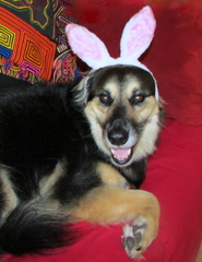 "Flossy sez: ""Happy Easter"""