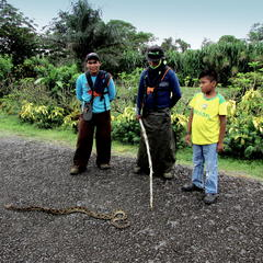 Fer de Lance & our gardeners that used that stick to kill it.