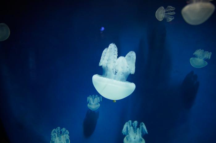 Chloe Ting, Dubai, Aquarium