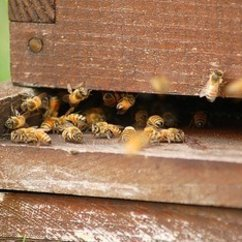 Honey Bee Initiative Goes to the Amazon