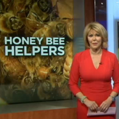 NBC4 Washington Visits the George Mason Honey Bee Initiative