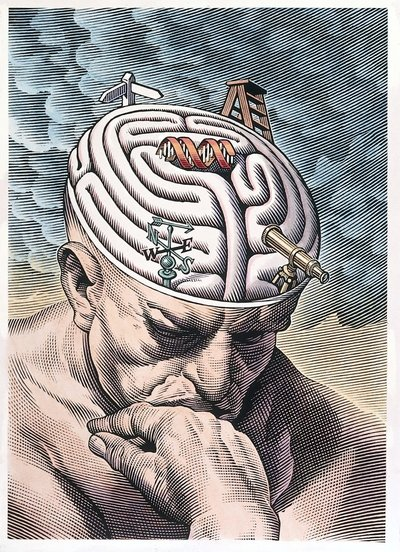 The gyri of the thinker