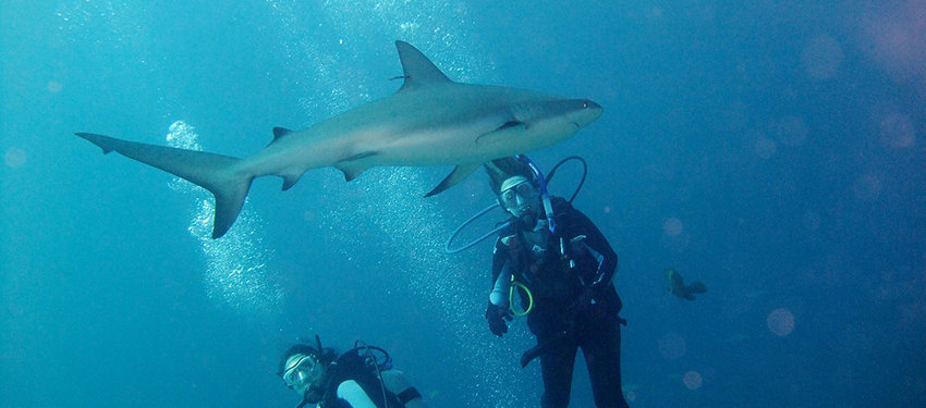 Mason students have close encounters with sharks during a Coral Reef Ecology class in the Bahamas.