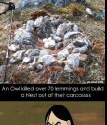 Owl is vengeance