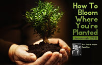 How To Bloom Where You're Planted banner