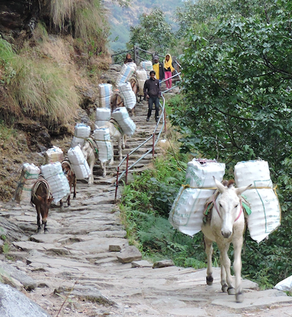 Nepaland the donkeys