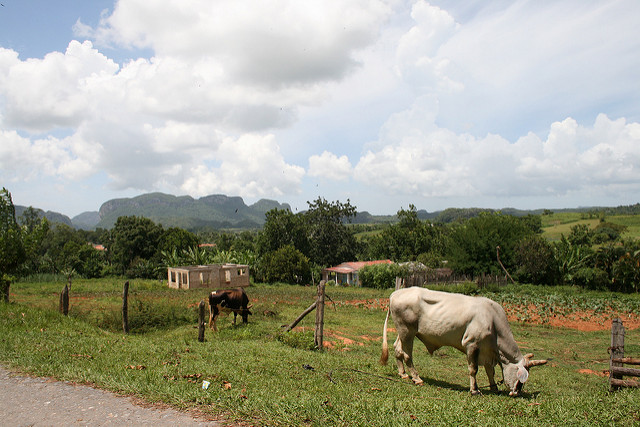 IPD Article Image - Cuba hopes to take lead on sustainable development debate