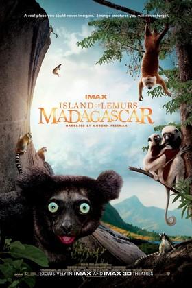 Insel der Lemuren - Madagascar