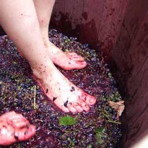 Wine-making-recipe